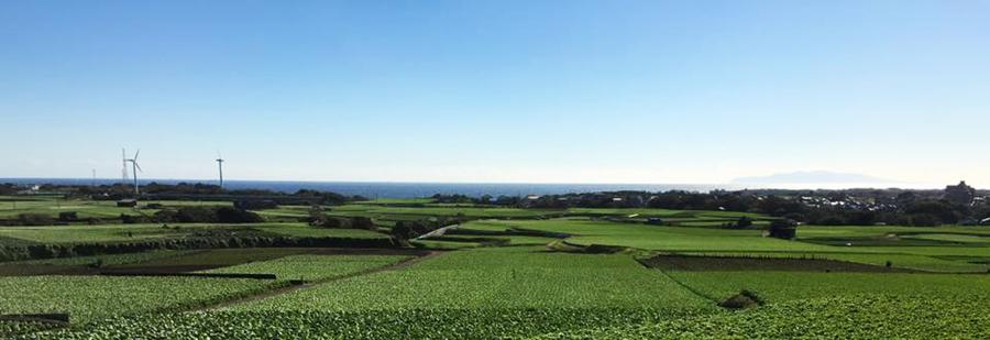 三浦半島の畑