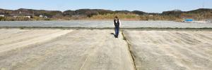 寒冷紗をかけた富津のキャベツ畑
