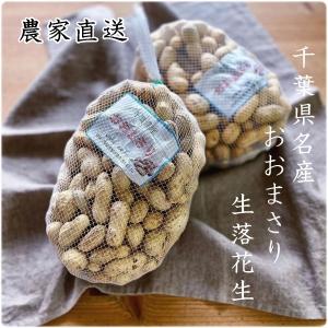 千葉県名産おおまさりの通販、販売、お取り寄せ、農家より生落花生を直送