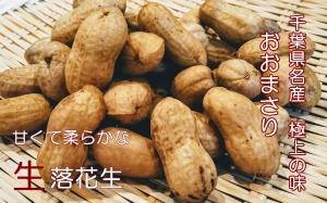 千葉県名産の生落花生のおおまさりを通販で農家直送