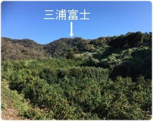 三浦富士と津久井浜みかん畑