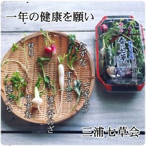 三浦七草会の春の七草