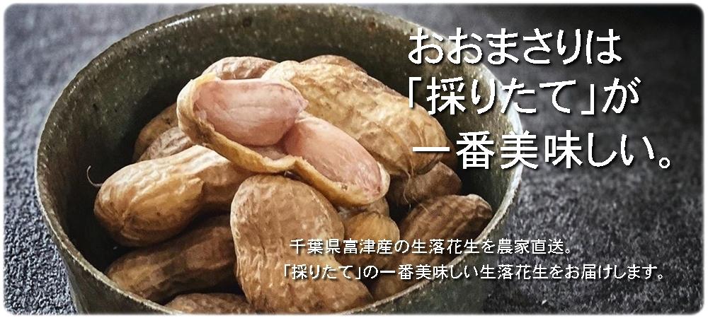 千葉県産生落花生のおおまさりを通販でお届けします。