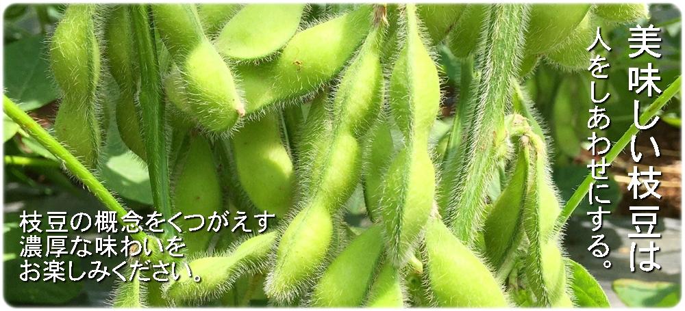 ごぞんじですか?潮風が育む大地の恵み。香り豊かな「はねっ娘会」の枝豆