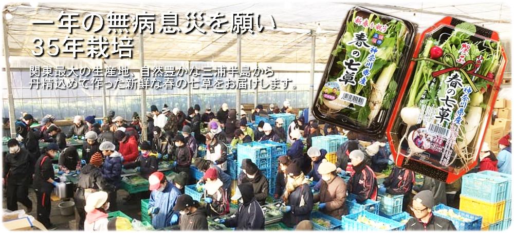 春の七草の通販・販売・お取り寄せ。はねっ娘会の春の七草を農家直送します。