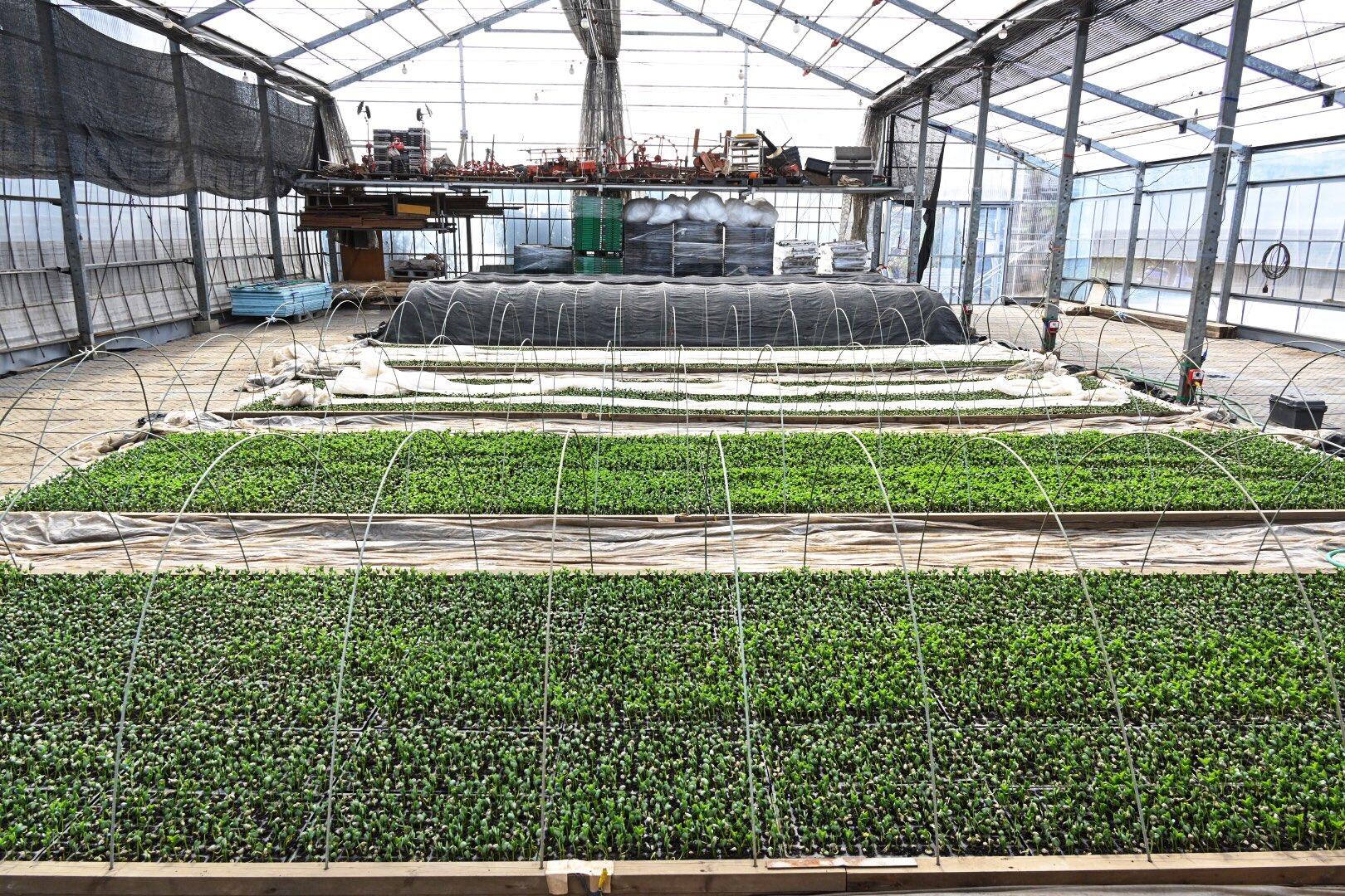 枝豆の苗床